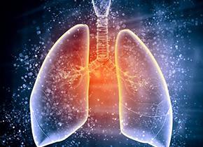 肺还是重要造血器官