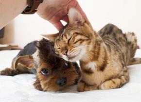 """为什么猫狗都喜欢被""""摸头杀""""?"""