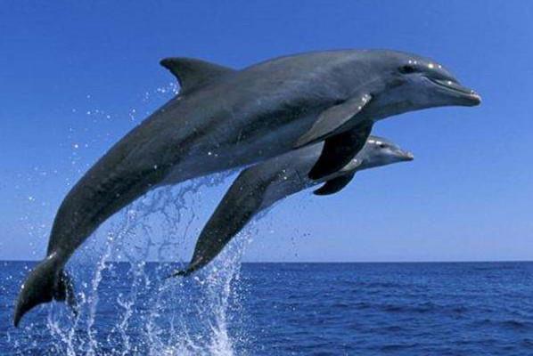 金侨驹�(_鲸和海豚的社交生活与人类相似