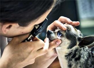 狗、猫、金鱼和人类眼中的不同世界