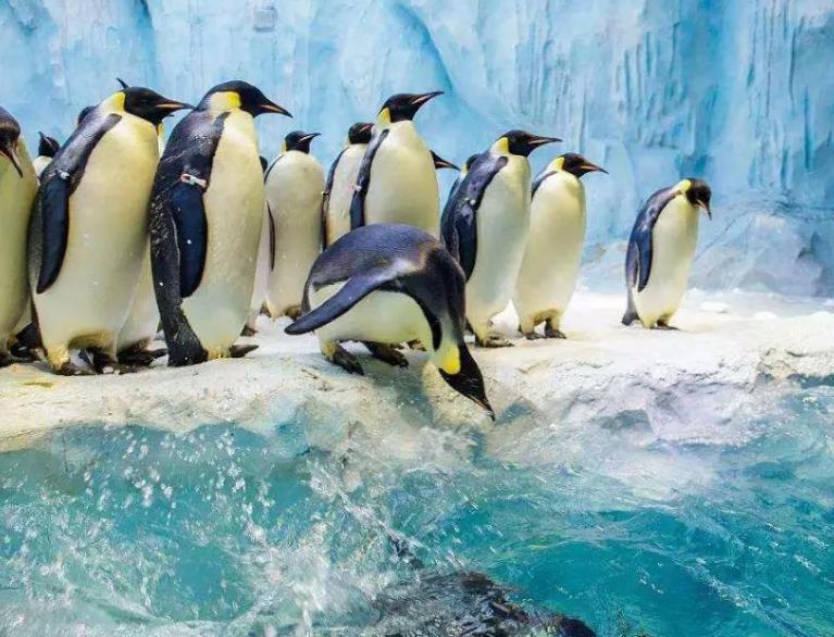 """海洋馆里的""""丑小鸭""""——新生帝企鹅救助记"""