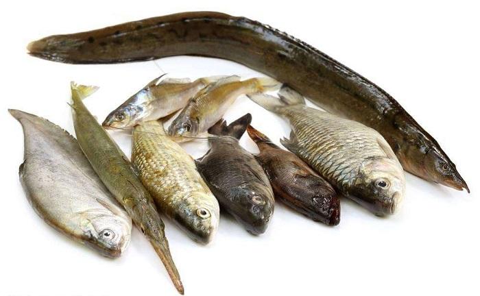 买鱼5大误区
