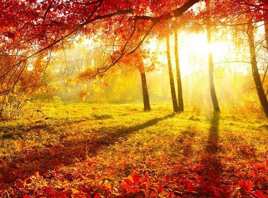 秋日吃穿,挑白的来