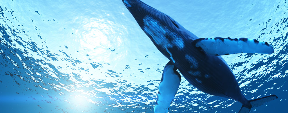 鲸为什么能长这么大
