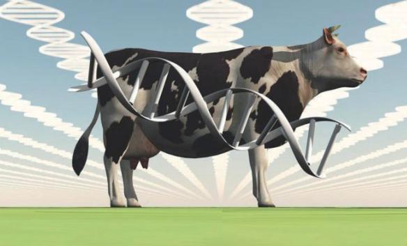 转基因肉,未来5年内上餐桌?