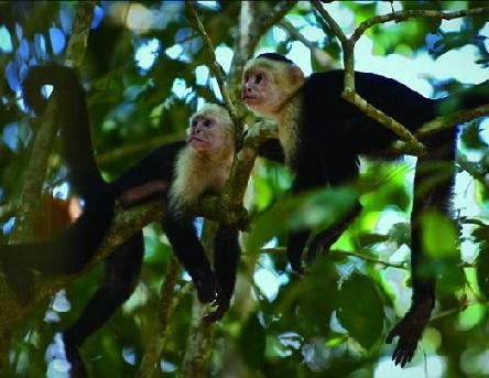 猴屁股都是一样的红扑扑,猴脸却各有各的红粉灰黑
