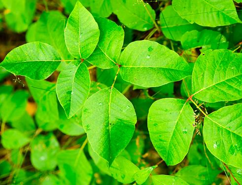 植物为什么要制造毒素