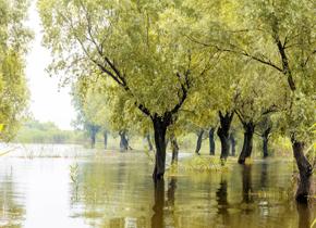 洪水可能源自天河