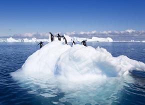 天这么热,南极企鹅能挺住吗?