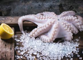 章鱼是怎样模拟身边五彩缤纷的环境的?