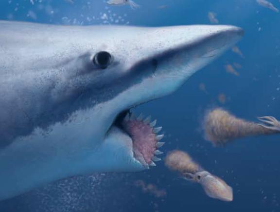 拥有旋转牙齿的怪鲨