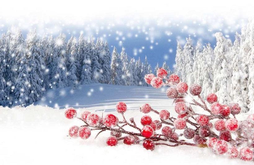 降雪是件矫情事