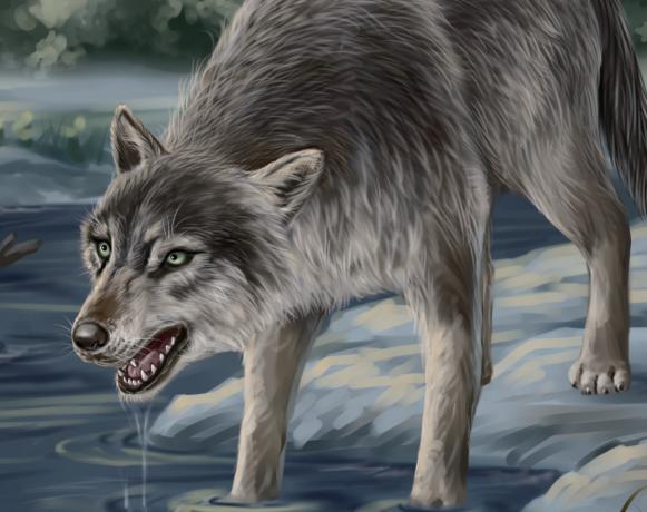 甩掉一只赖皮狼