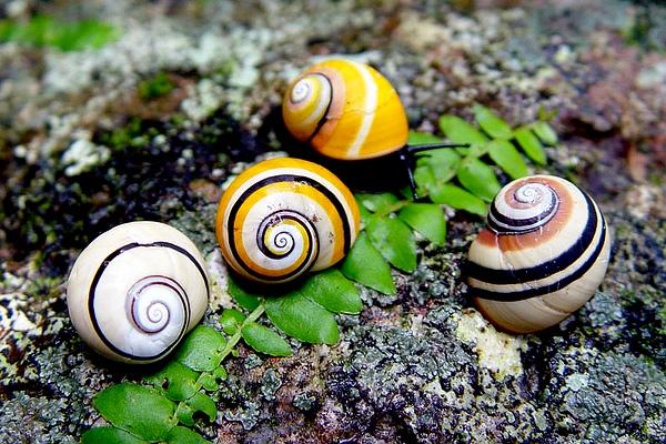 颜值最高的蜗牛