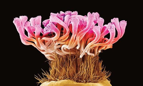 微观植物世界