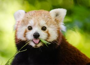 哺乳动物如何在发育中保持对称性