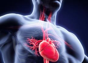 心脏可以长出新血管吗?