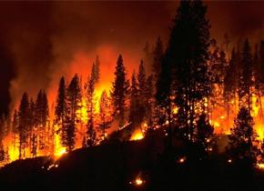 压抑野火只会让火情更糟?