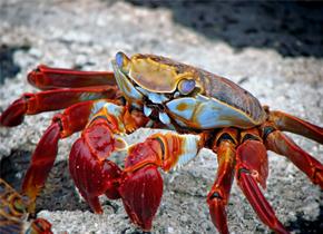 海鲜中的致命杀手-海洋创伤弧菌