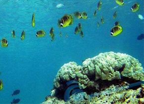 海洋缺氧导致生物大灭绝