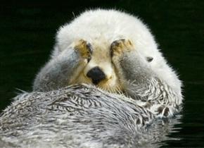 海獭的爪可以敏锐感知猎物
