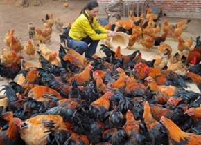 养殖业该禁用抗生素?
