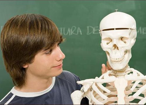 骨头是用什么做的?