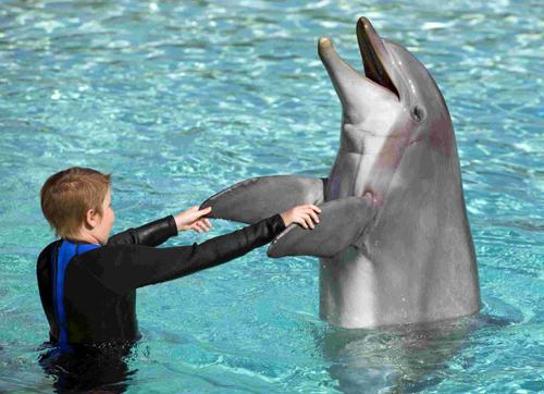 了不起的海豚