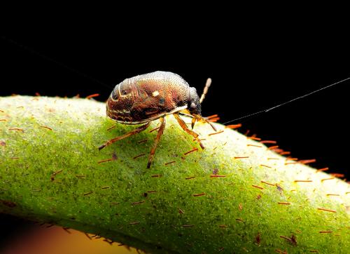 昆虫为什么不能长得和人一样大?