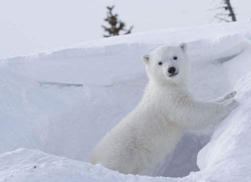 北极气候巨变