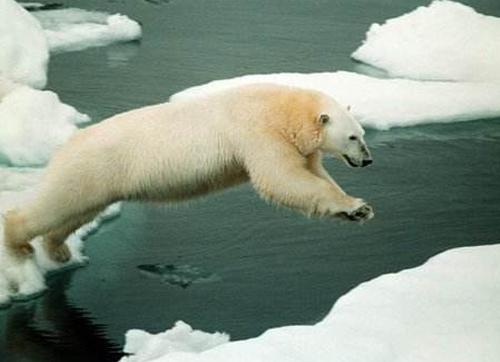 全球变暖让动物缩小了?