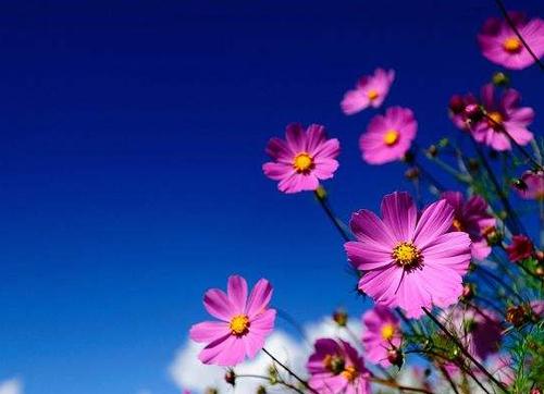 花朵是怎样诱骗昆虫授粉