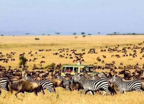 东非迁徙路上的食物链
