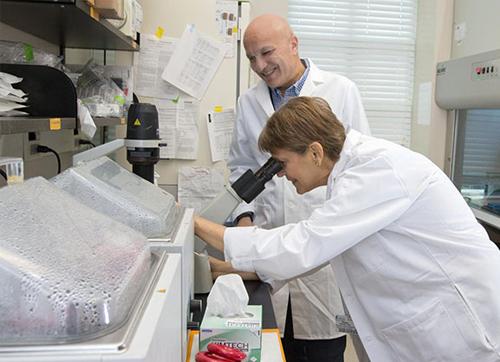 调控线粒体衰老的新蛋白