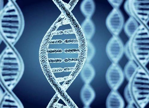 """骨頭裏的膠原蛋白也是一種""""指紋""""嗎天天射寡婦射㊣ □ ?"""