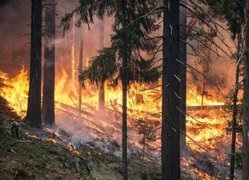 人类活动增加了加利福尼亚洲北部山火的风险