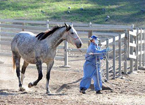 防控新冠肺炎疫情,阻击人畜共患病