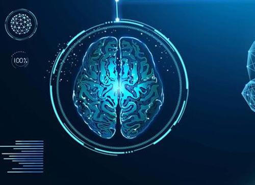 360多名科学家首次揭示大脑灰质的遗传结构