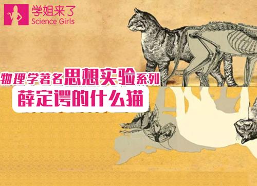 【学姐来了】薛定谔的什么猫?