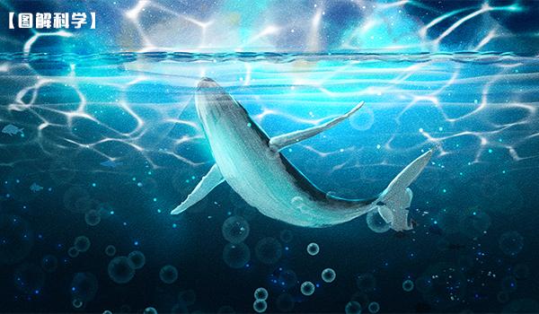 【图解科学】一鲸落,万物生,当一头鲸鱼离开世界之后...