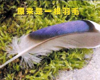 原来是羽毛