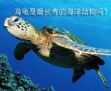 海龟是最长寿的海洋动物吗?