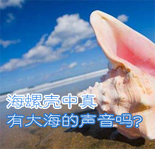 海螺壳中真的有大海的声音吗?