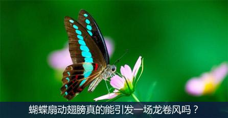 蝴蝶扇动翅膀真的能引发一场龙卷风吗?