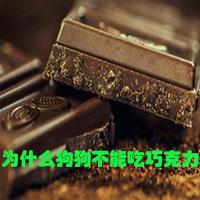 狗什么吃巧克力