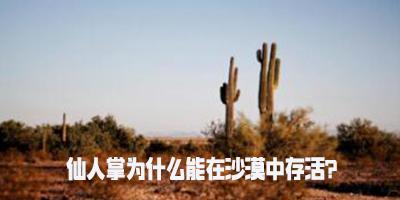 仙人掌为什么能在沙漠中存活?