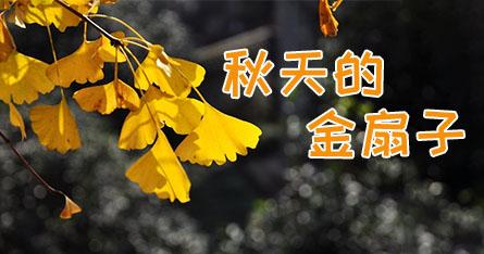 秋天的金扇子