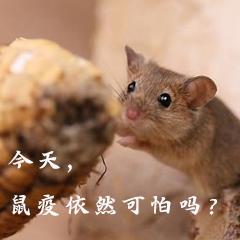 今天一本道東京熱無碼◥,鼠疫依然可怕嗎飄花電影網手機版】?