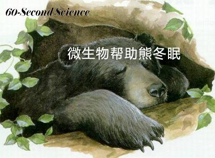 【科学60S】微生物帮助熊冬眠