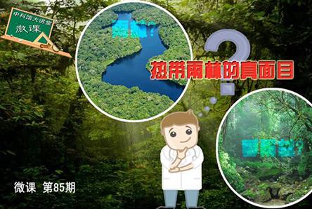 【微课】第85期:热带雨林的真面目
